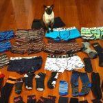 Γάτα είχε μανία να κλέβει ανδρικά εσώρουχα