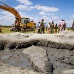 Η δραματική διάσωση ενός ελέφαντα που είχε κολλήσει στις λάσπες