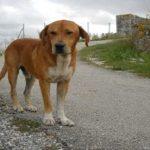 Κινδυνεύει με φυλακή γιατί έδωσε στο σκύλο του όνομα προέδρου