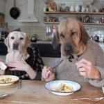 Γεύμα 2 σκύλων σε τραπέζι! Τρομερό χιουμοριστικό βίντεο