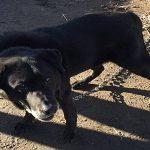 Απελευθέρωσαν σκύλο πού ήταν 15 χρόνια αλυσοδεμένος