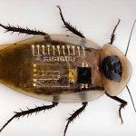 Η τσιπαρισμένη κατσαρίδα μπορεί να κάνει θαύματα για τον άνθρωπο